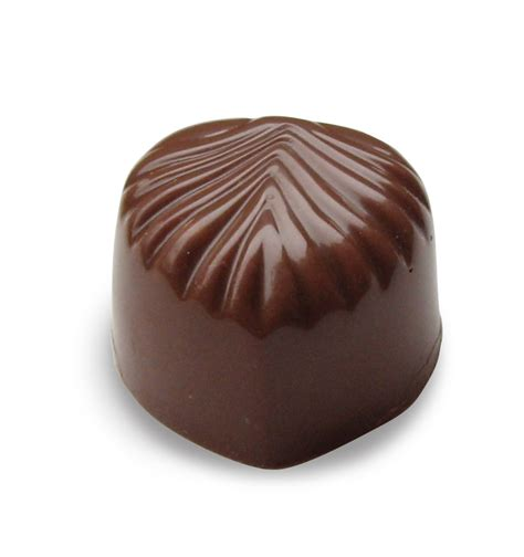 chocolate yorkshire rose photo 17300976 fanpop