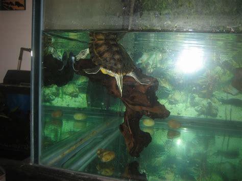 guided    pet turtle tank pet turtles
