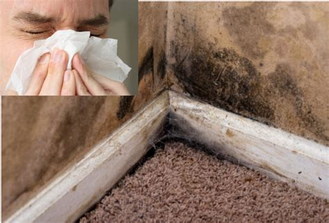 symptoms of mold in house mold in house symptoms 28 images symtoms of mold exposure 13 symptoms of mold in