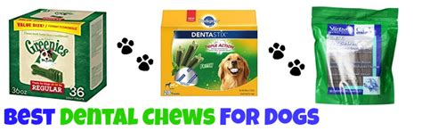 best dental treats for dogs the best dental chews for dogs cleaning chews hygiene treats