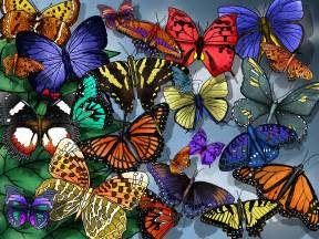 colors of butterflies different types of butterflies and colors images