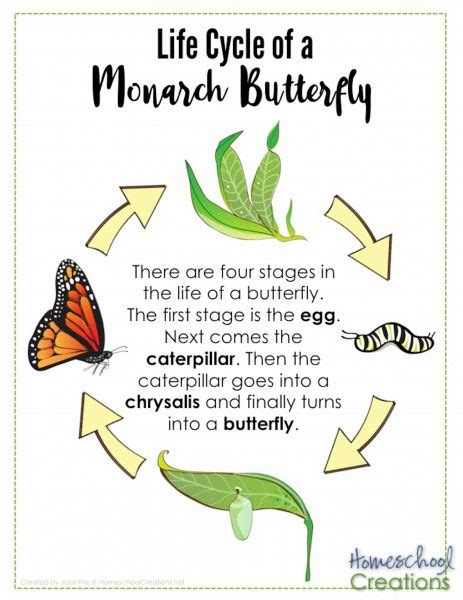 life cycle  monarch butterfly poster homeschoolcreationsnet