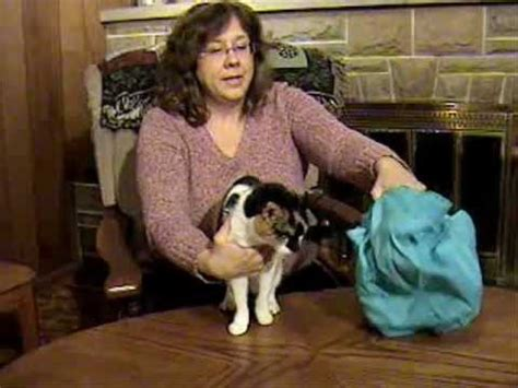 Cat Comfort Bag by Using The Cat In The Bag Cozy Comfort Carrier Wmv