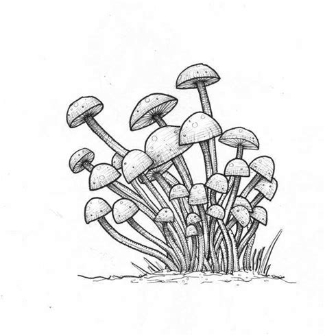 fungi coloring worksheet protist worksheet coloring pages