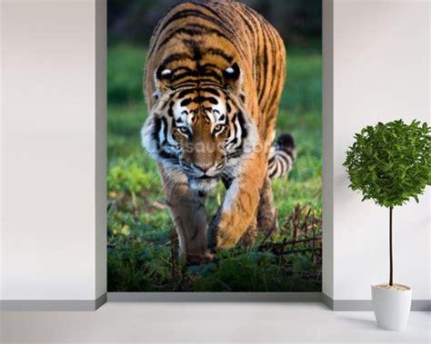tiger wall mural siberian tiger wallpaper wall mural wallsauce usa