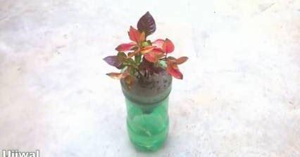 membuat pot bunga  botol plastik kreator kerajinan