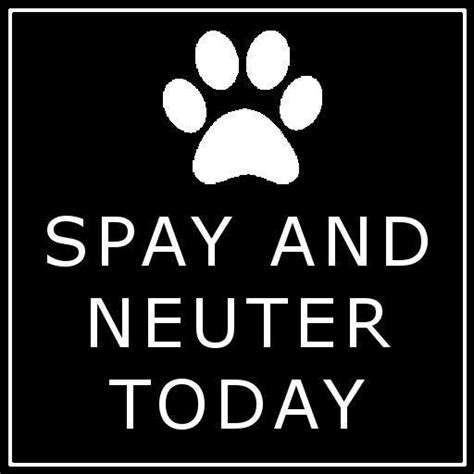 cost to neuter a feline low cost spay and neuter clinic may 11 outer banks commongood