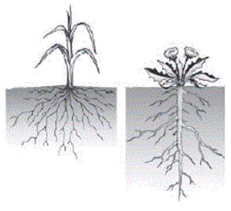 strukturjaringanjenis fungsi akar  tumbuhan ir