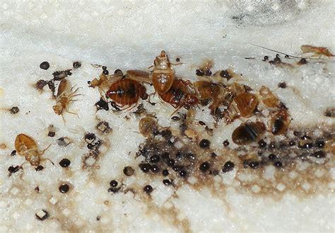 bed bugs jaya pest solutions
