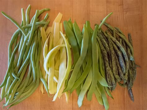 types of garden beans david tanis green bean salad island kitchen gardens