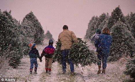 christma tree farm