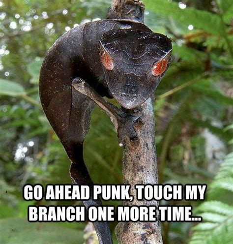 Reptile Memes - pin by sue stone on reptiles pinterest