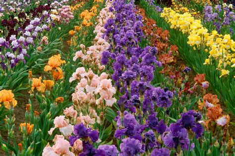 How To Make A Beautiful Flower Garden Beautiful Flower Garden Flower Forest Cool Wallpapers Wonderful Flower Garden