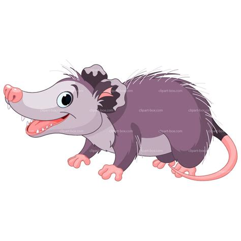 opossum clipart possum clipart clipart suggest