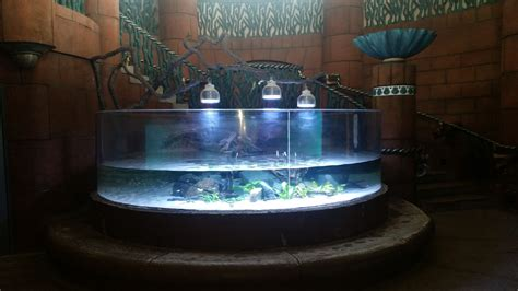 Bahamas Hotel Chooses Orphek Led Lighting Orphek Led Lights For Aquarium