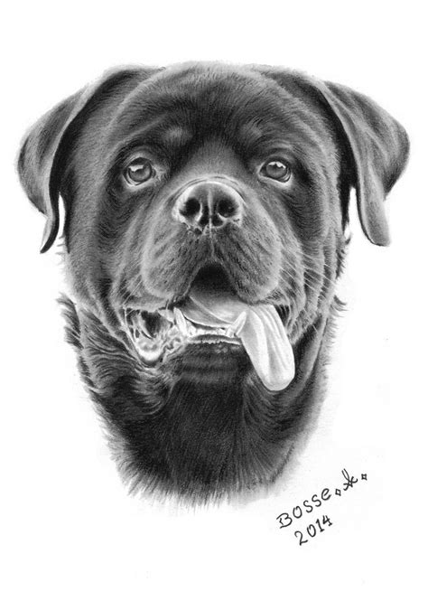 rottweiler black and rottweiler 2 by torsk1 on deviantart black and white drawing