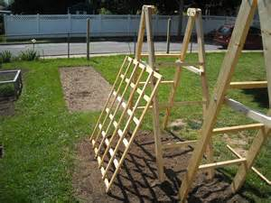 cucumbers on a trellis tomato ladders and cucumber trellises the year harvest