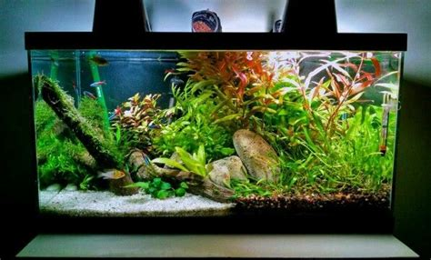 unbelievable  tech   aquascape aquarium design
