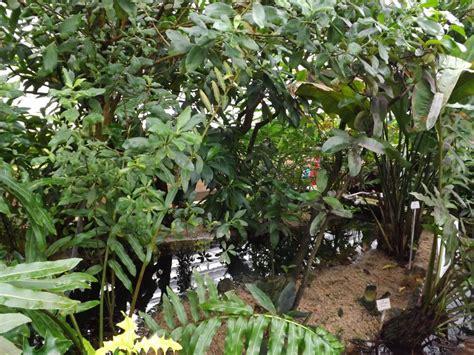 Botanischer Garten München Schmetterlinge by Tropische Schmetterlinge Im Botanischen Garten M 252 Nchen Der Beutelwolf