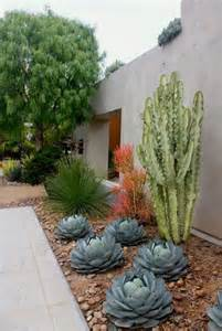 how to use cacti in outdoor decor outdoortheme com