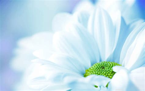 wallpaper background images download flower background 183 download free stunning high