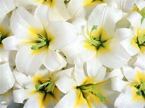 beautiful flower images beautiful flowers wallpapers latest news