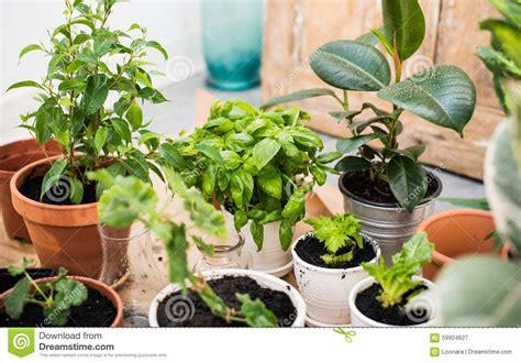 giardino balcone giardino balcone immagine stock immagine di giardino