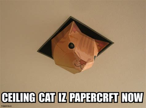 Cat Stares At Ceiling by Favorite Meme