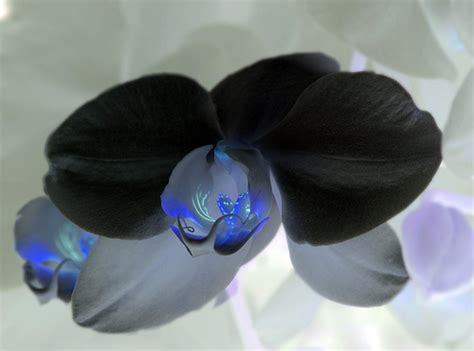 best florist near me black orchid what can i say got to playing and i liked