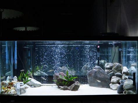 aquarium design for cichlids 75 gallon aquarium design 75 gallon tanganyikan cichlid