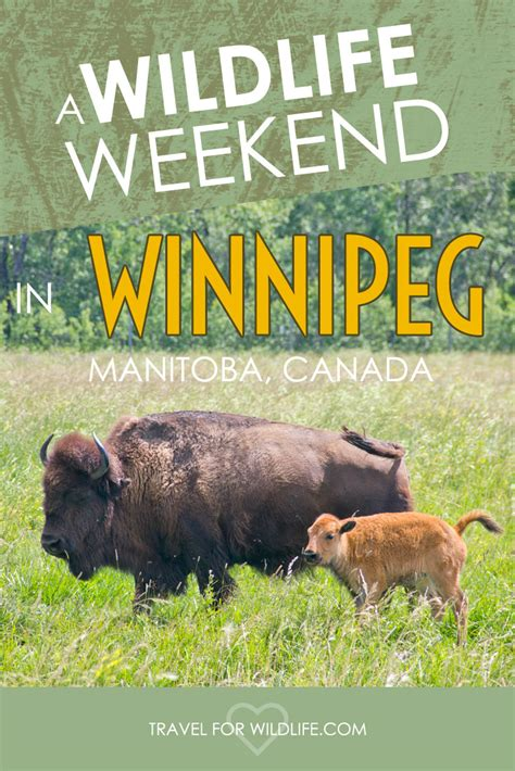 wildlife weekend in winnipeg travel for wildlife