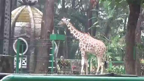 gambar pemandangan zoo foto viral hd