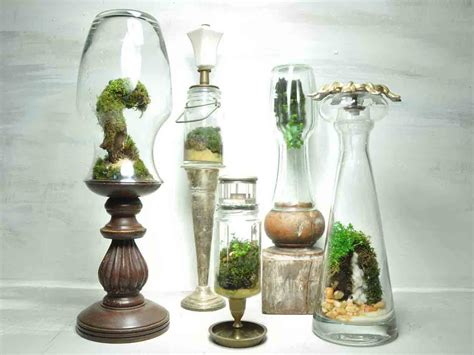 best plants for self contained terrarium jose agatep s beautiful repurposed bottles terrariums are self contained ecosystems the slug and