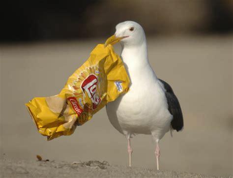 lynn s little bit of trivia our landfill nonfeasance