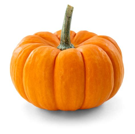 image of pumpkin pumpkin a differencea difference