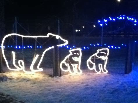 zoo light calgary 17 best images about calgary zoo lights on