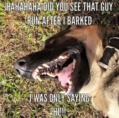 Funny German Memes - 120 best images about german shepherd memes on pinterest