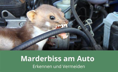 Marder Auto Versicherung by Marderbiss Am Auto Erkennen Und Vermeiden 187 Alles Wissenswerte