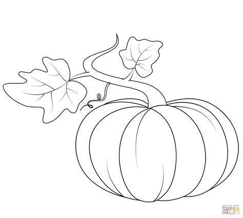 coloring pages of pumpkin vines blank pumpkin template coloring home