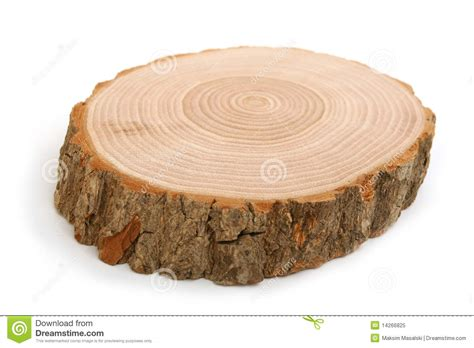 cross section of a tree trunk cross section of tree trunk showing growth rings royalty