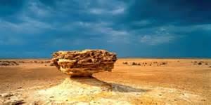 Landscape Architect Qatar Exhibition Showcase Qatari Landscape And Architecture