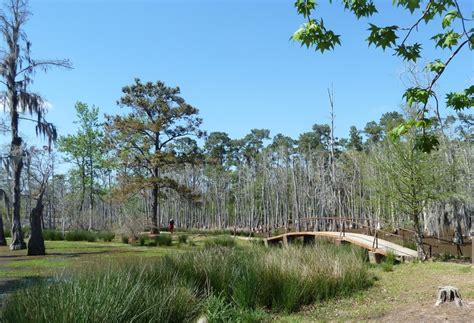 Lake Charles Cabins by Sam Houston Jones State Park Located In Moss Bluff Near