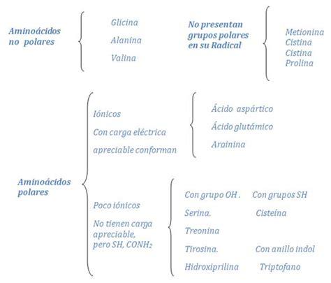 cadena carbonada solubilidad amino 225 cidos y prote 237 nas monografias