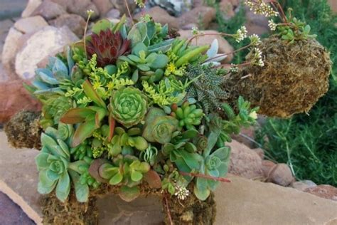 succulent garden turtle planter contemporary plants by zulily 10 best images about succulent turtles ndb on pinterest