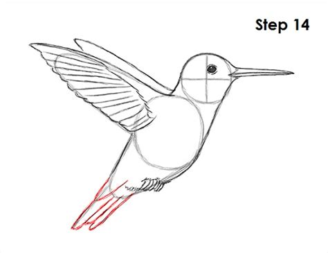 how to draw a hummingbird colibr 237 es pinterest
