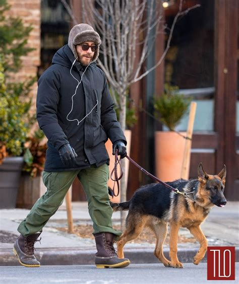 nyc puppies jake gyllenhaal and hugh jackman walk their dogs in nyc tom lorenzo