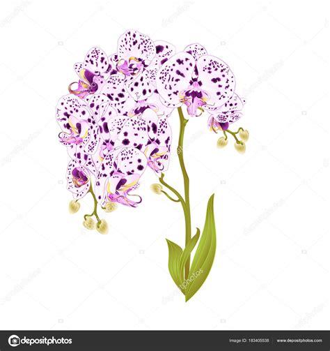 rami di fiori da colorare meglio di disegni colorati di rami di fiori per disegnare