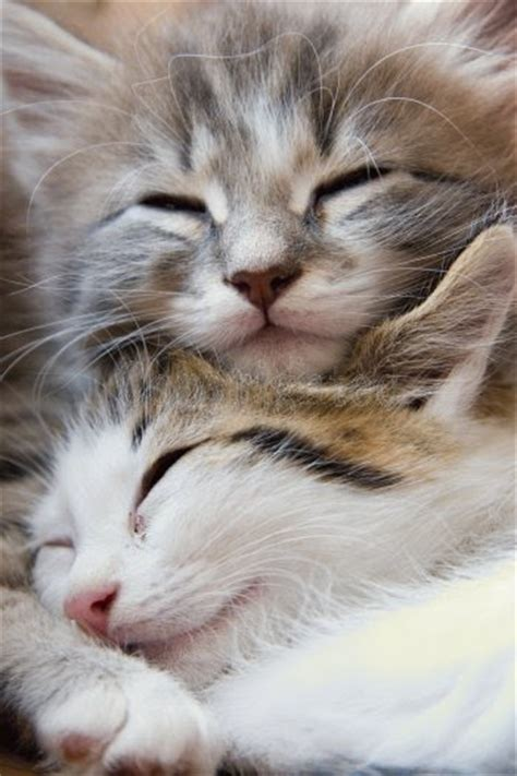 i love cats cute cat kitten pictures cute cat catpictures2 caitlintye