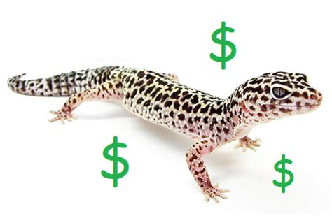 Care Background Check Cost Leopard Gecko Substrate Clubfauna
