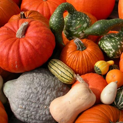 pumpkin squash and gourds center for agriculture food and the environment umass amherst